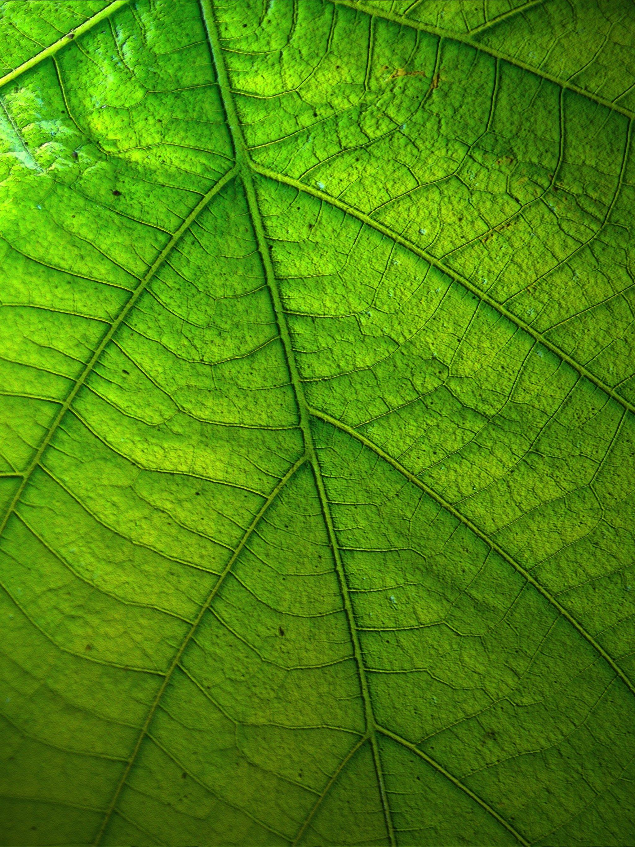 green leaf wallpaper - mobile & desktop background