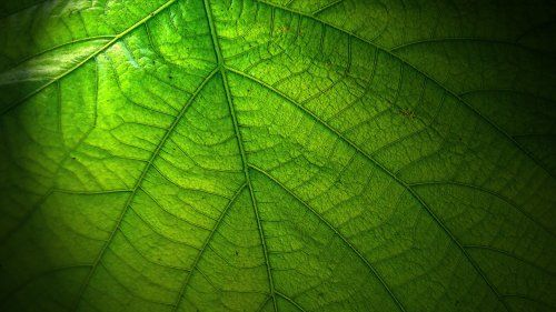 Green Leaf HD Wallpaper