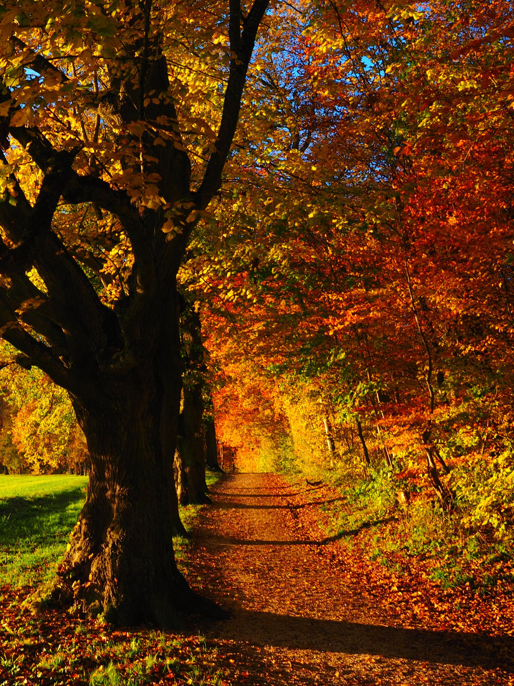 Fall Forest Wallpaper Iphone Android Desktop Backgrounds