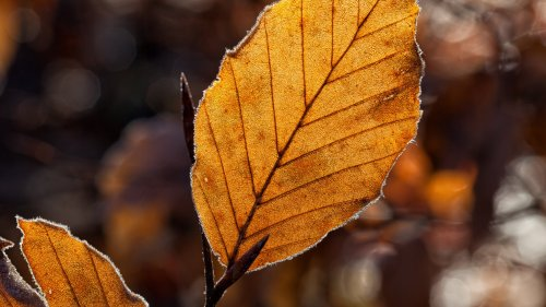 Dried Leaf in the Light HD Wallpaper