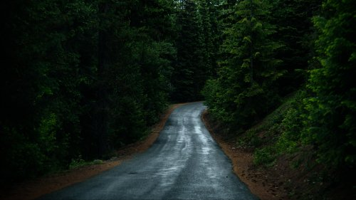 Road Through Forest HD Wallpaper