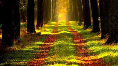 Light Path Through the Trees HD Desktop Wallpaper