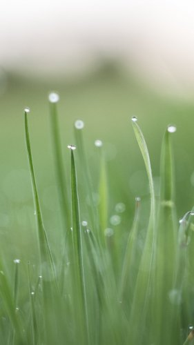 Green Dewey Grass Mobile Wallpaper