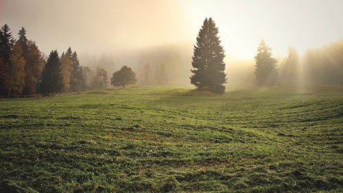 Divine Light in Meadow Wallpaper