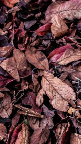 Fall Leaves on Ground Texture