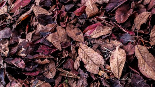 Fall Leaves on Ground Texture Wallpaper