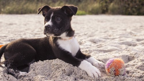 Puppy on the Beach HD Wallpaper