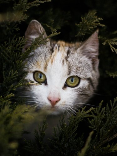 Cat Peeking Out Behind Branches