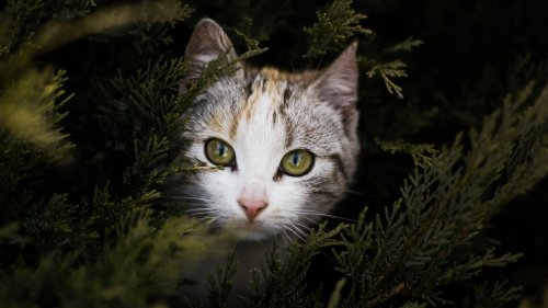 Cat Peeking Out Behind Branches HD Wallpaper