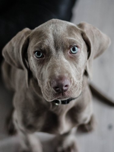 Brown Lab