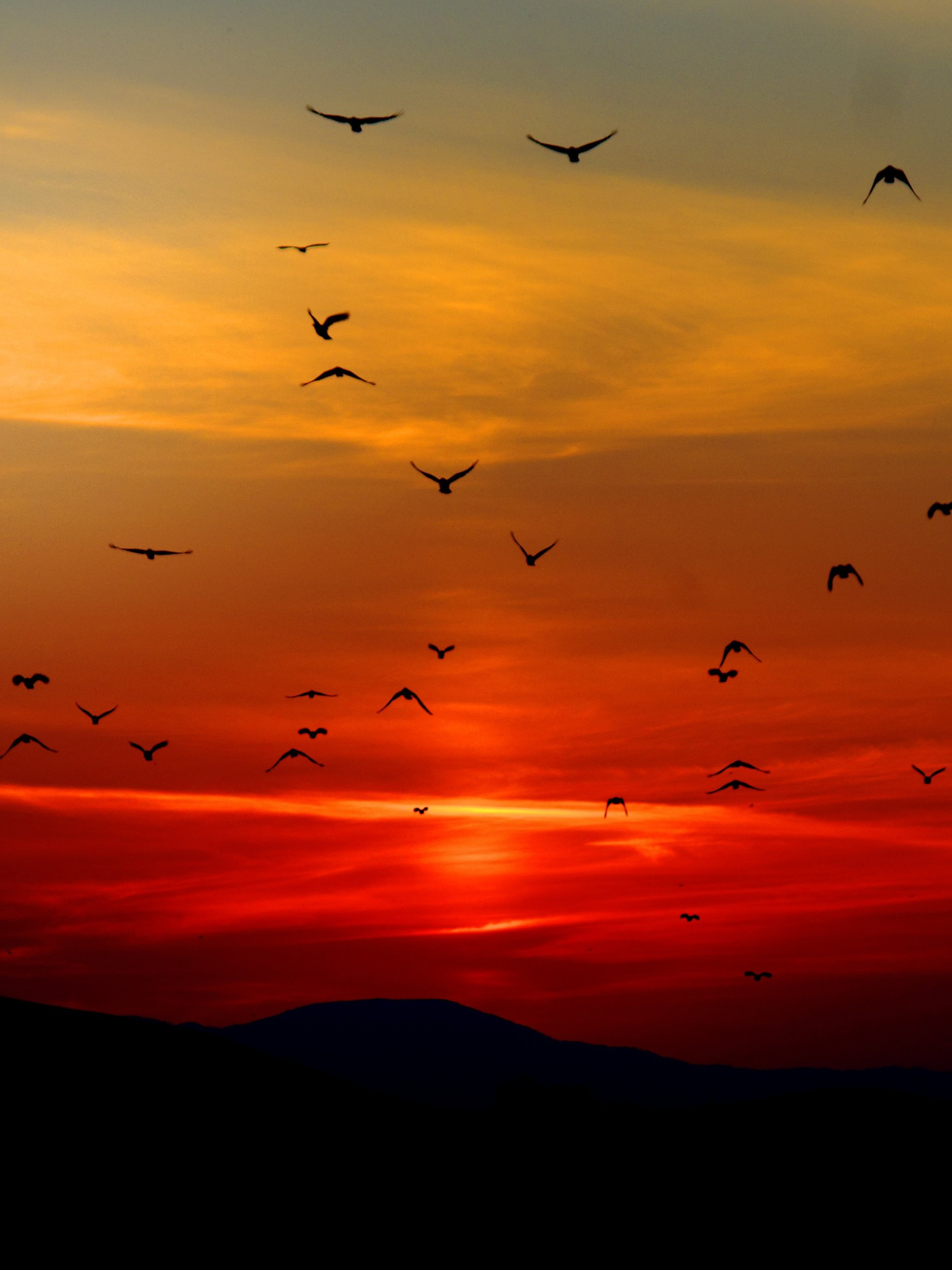 Birds In Sunset Wallpaper Iphone Android Desktop Backgrounds