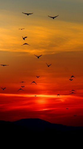 Birds in Sunset Mobile Wallpaper