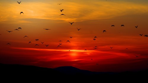 Birds in Sunset HD Wallpaper
