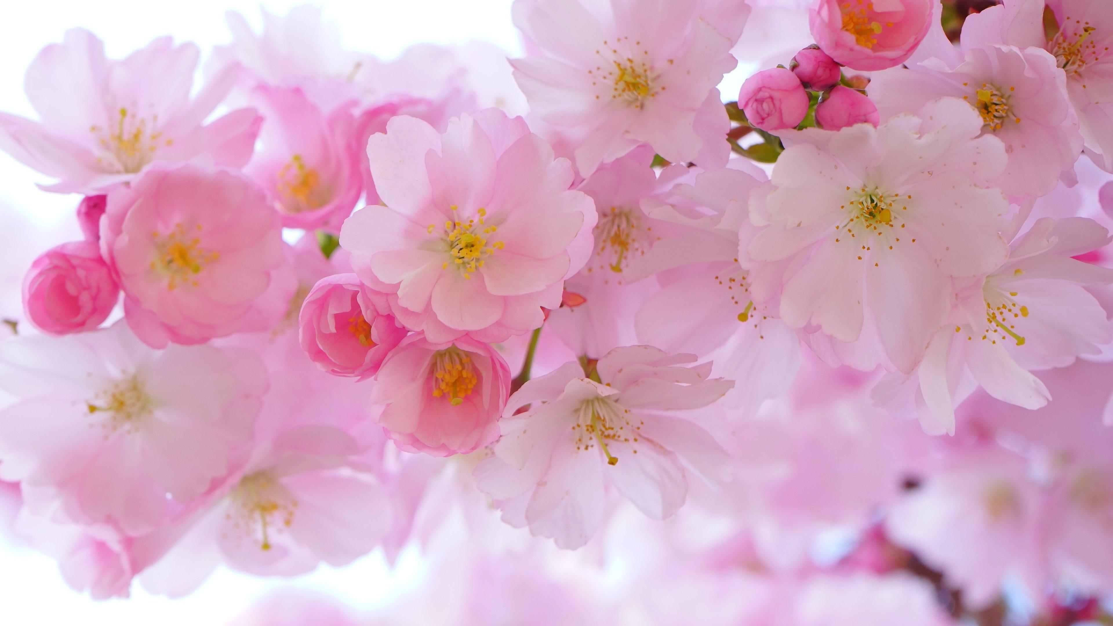 flower wallpaper for mobile, desktop, hd