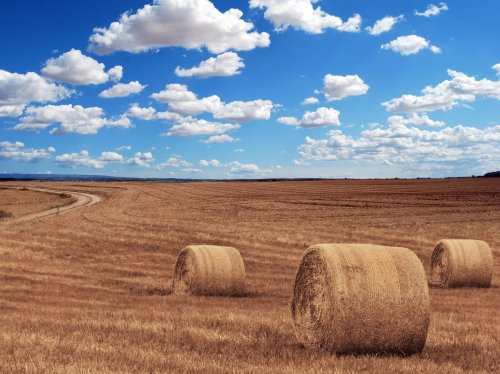 Hay Bales in Field  Wallpaper