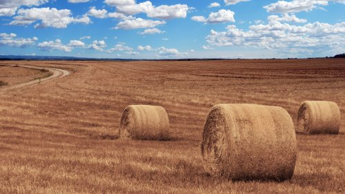 Hay Bales in Field HD Desktop Wallpaper
