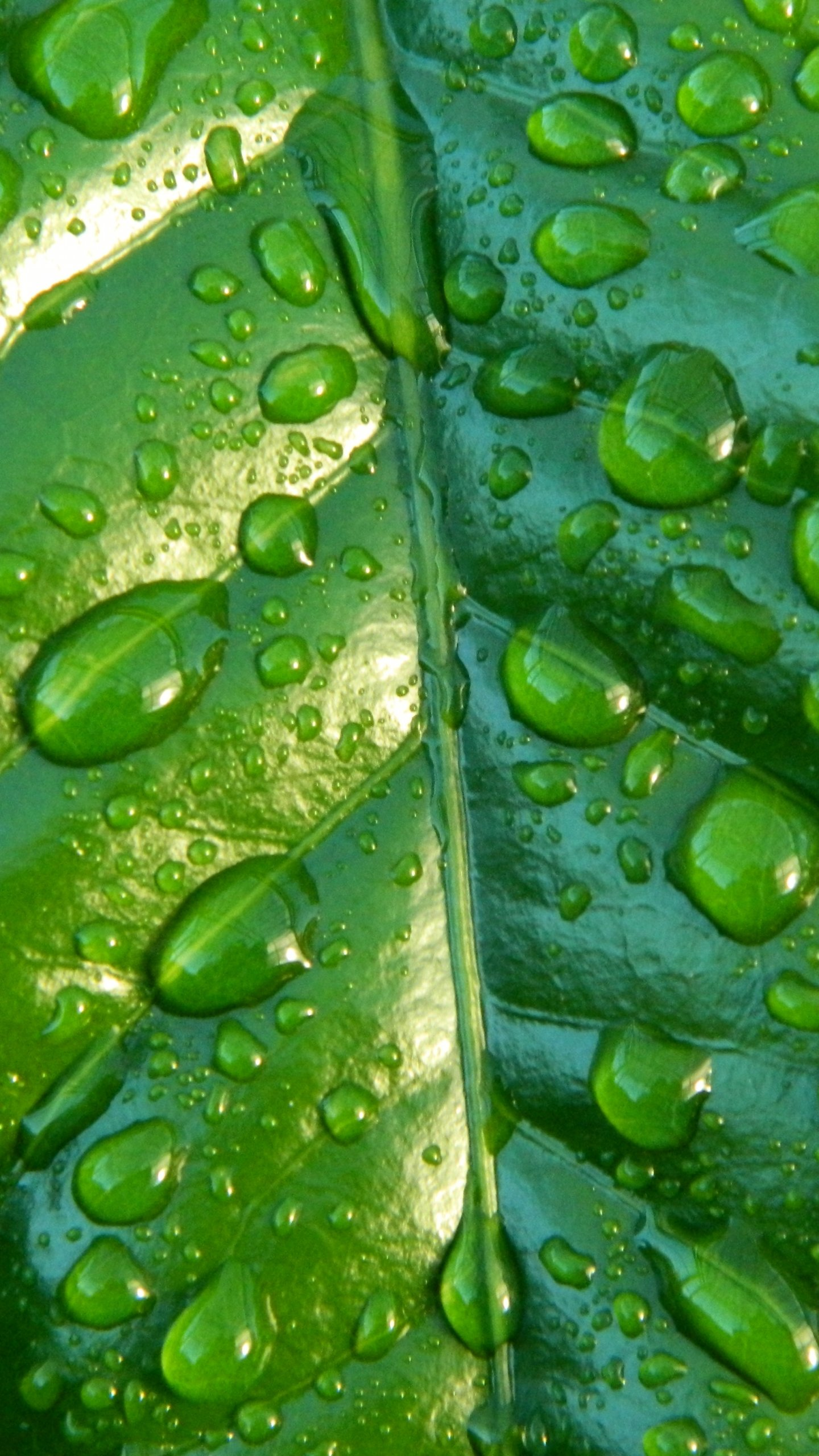 Raindrops On Leaf Wallpaper Iphone Android Desktop