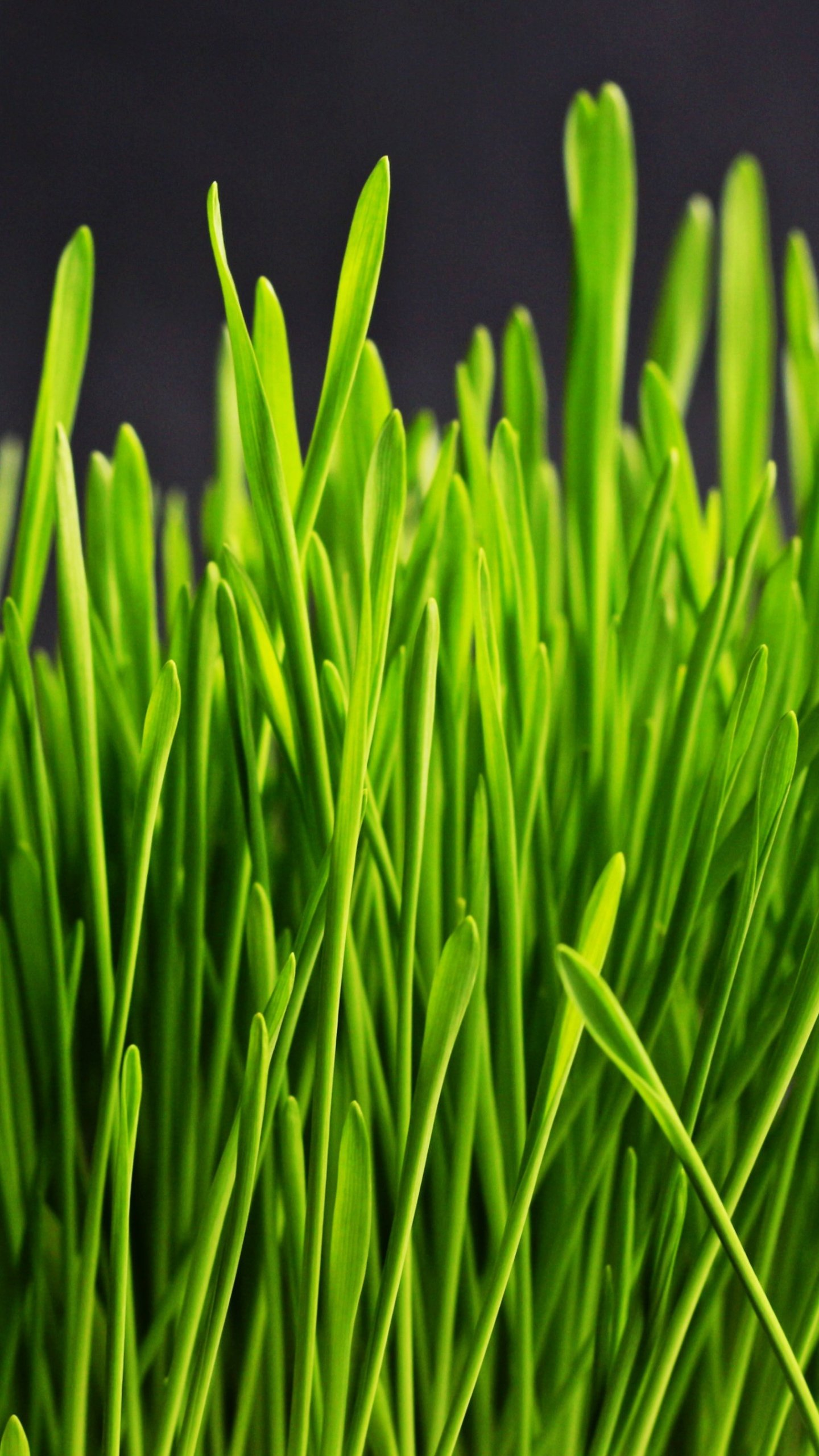 Green Grass Wallpaper Iphone Android Desktop Backgrounds