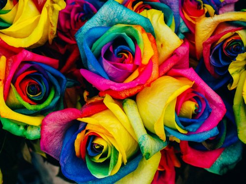 Rainbow Roses  Wallpaper