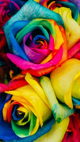 Rainbow Roses Mobile Wallpaper