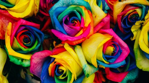 Rainbow Roses HD Wallpaper