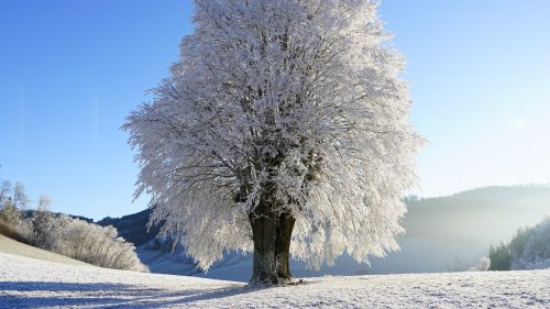 Tree in Snow Wallpaper