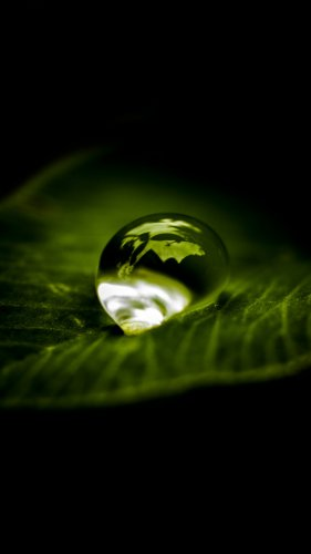 Waterdrop on Leaf Mobile Wallpaper