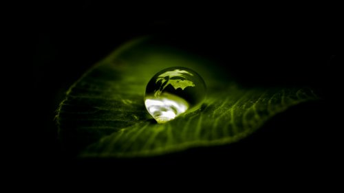 Waterdrop on Leaf HD Wallpaper