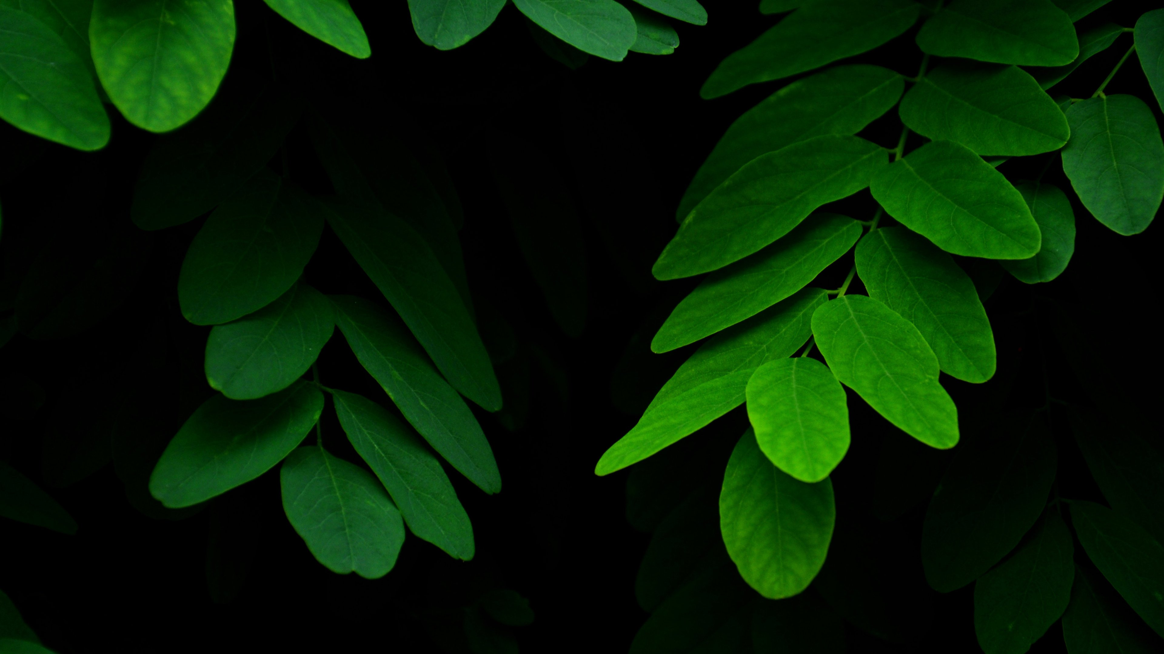 Leaves On Black Background