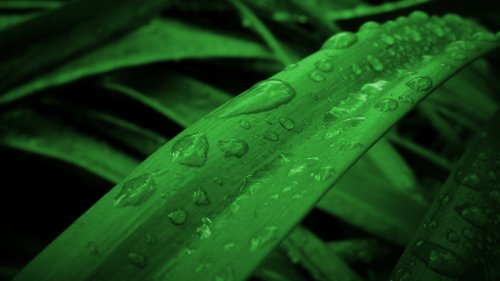 Raindrops on Grass Wallpaper