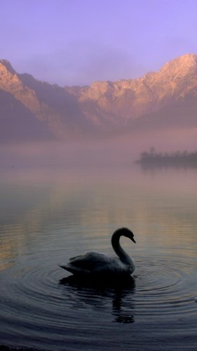 Swan in Mountain Lake Mobile Wallpaper