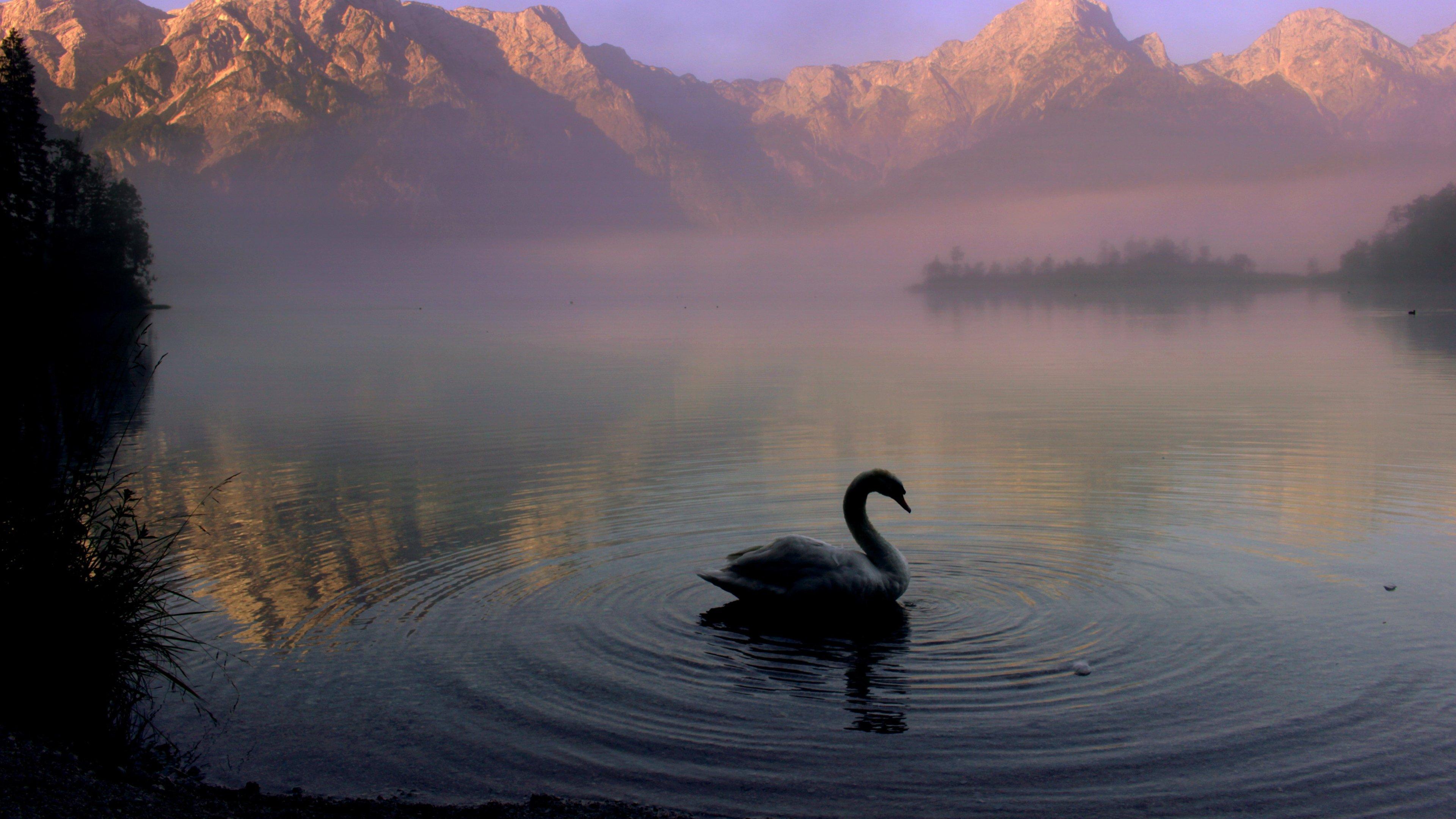 Iphone Android Desktop: Swan In Mountain Lake Wallpaper