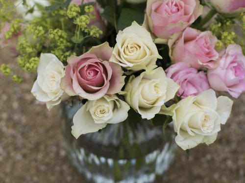 Pink & White Roses in a Vase  Wallpaper
