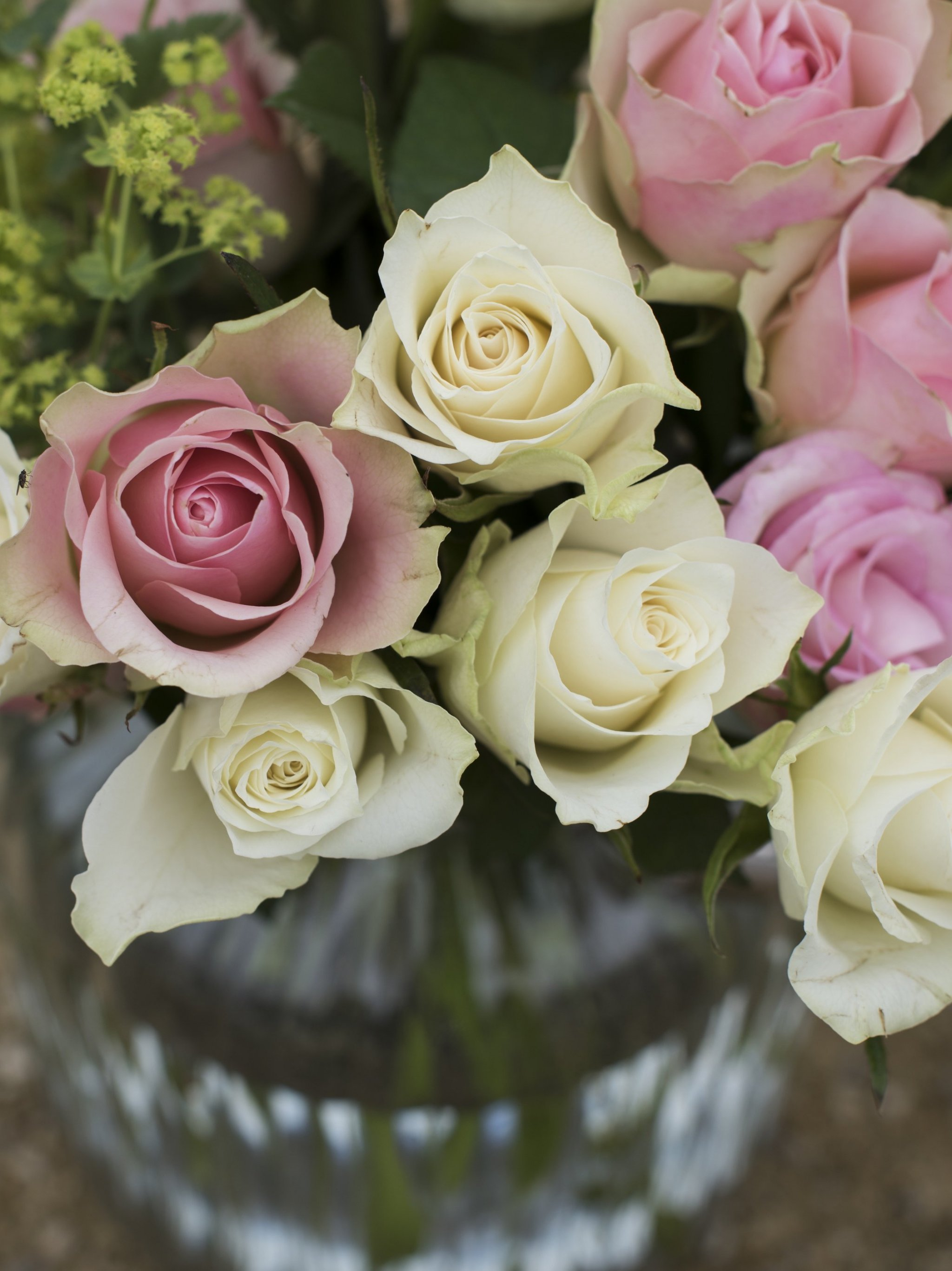 Pink White Roses In A Vase Wallpaper Iphone Android Desktop