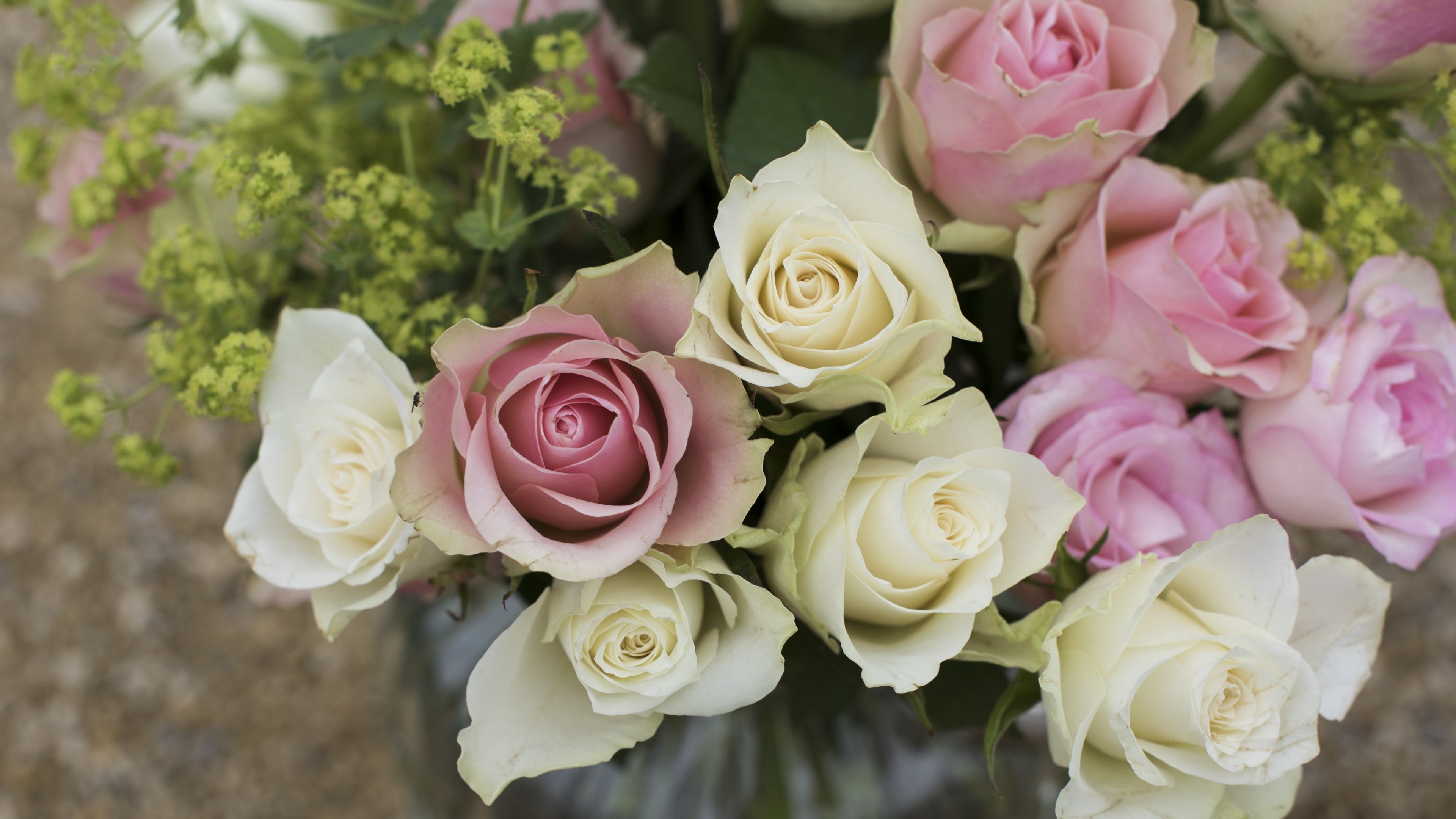 pink & white roses in a vase wallpaper - mobile & desktop background
