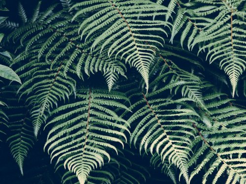Ferns  Wallpaper
