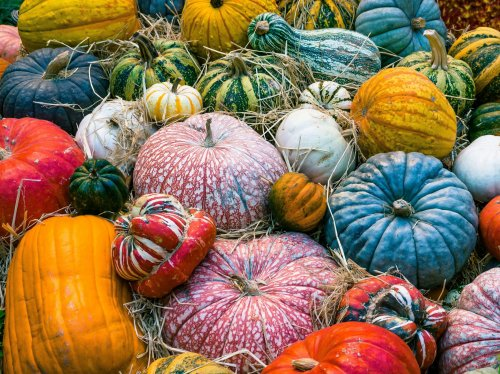 Colorful Pumpkins Autumn  Wallpaper