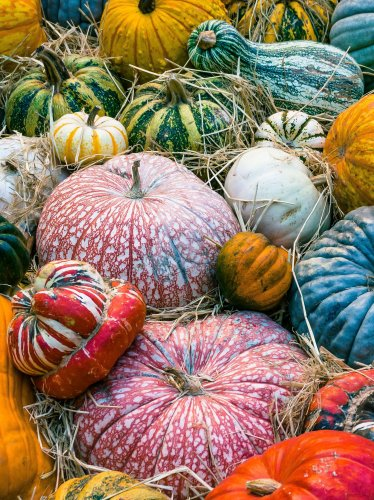 Colorful Pumpkins Autumn