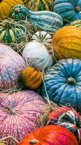 Colorful Pumpkins Autumn Mobile Wallpaper