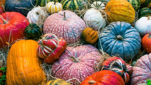 Colorful Pumpkins Autumn HD Desktop Wallpaper
