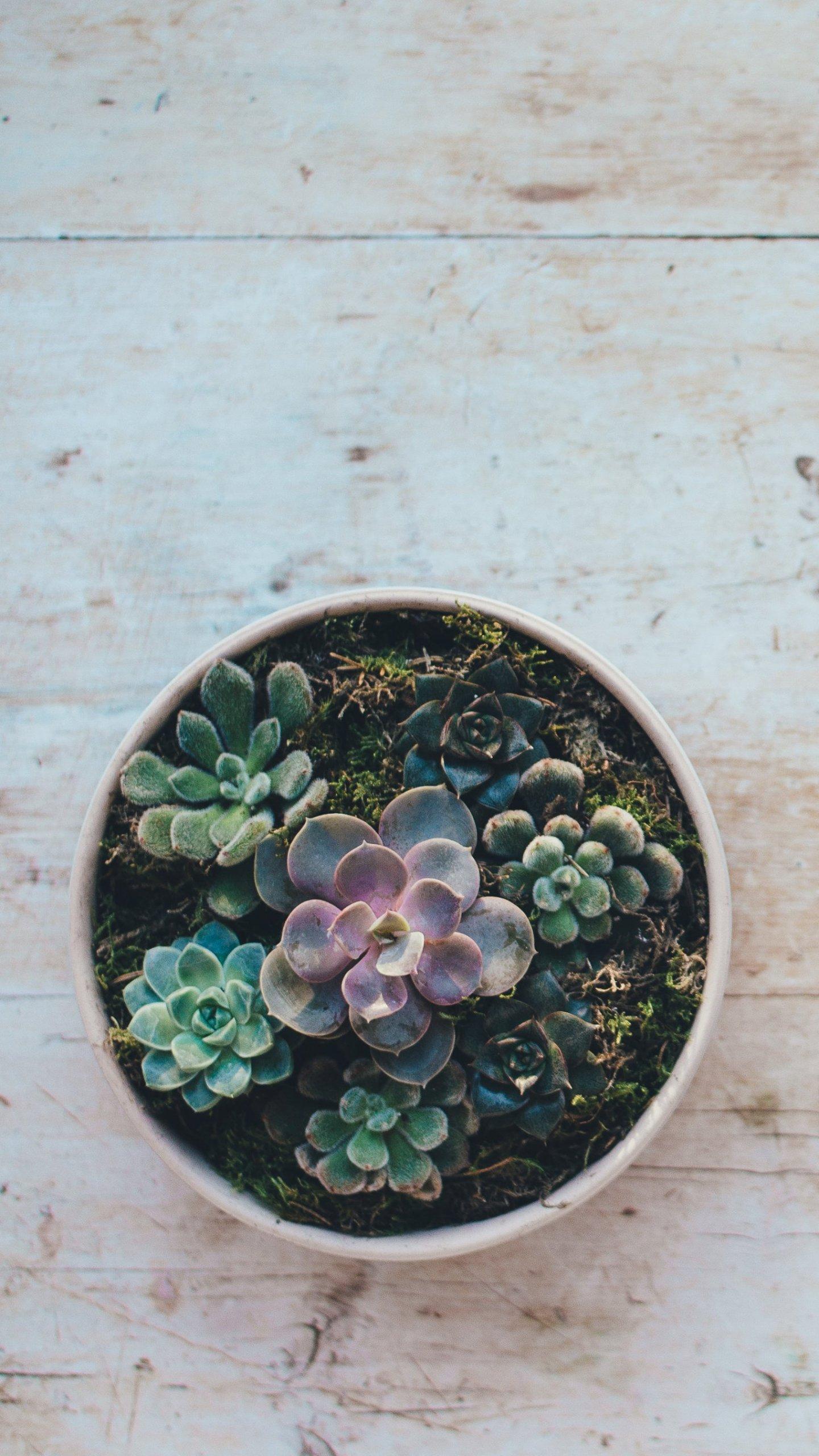 Cactus Succulent Wallpaper Iphone Android Desktop Backgrounds