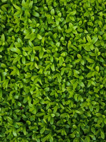 Tiny Leaves Texture