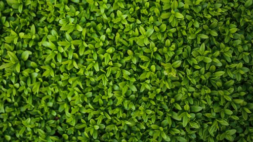 Tiny Leaves Texture Wallpaper