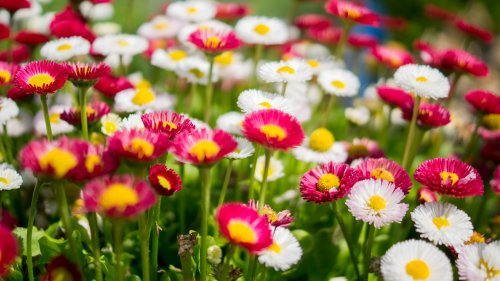 Wildflowers Wallpaper