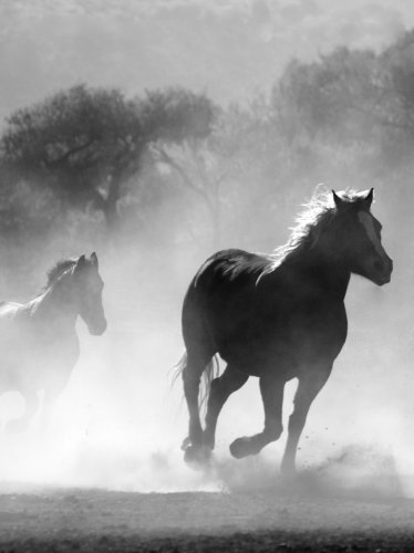 Horses in the Mist iPad Wallpaper