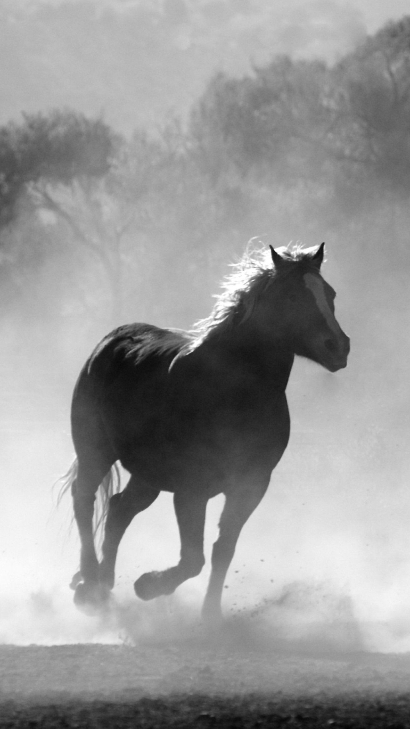 Horses In The Mist Wallpaper Iphone Android Desktop Backgrounds