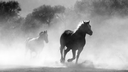 Horses in the Mist HD Wallpaper