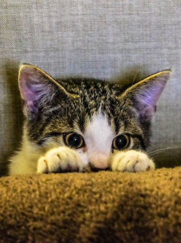 Kitten Peeking