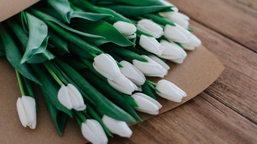 White Tulips HD Wallpaper