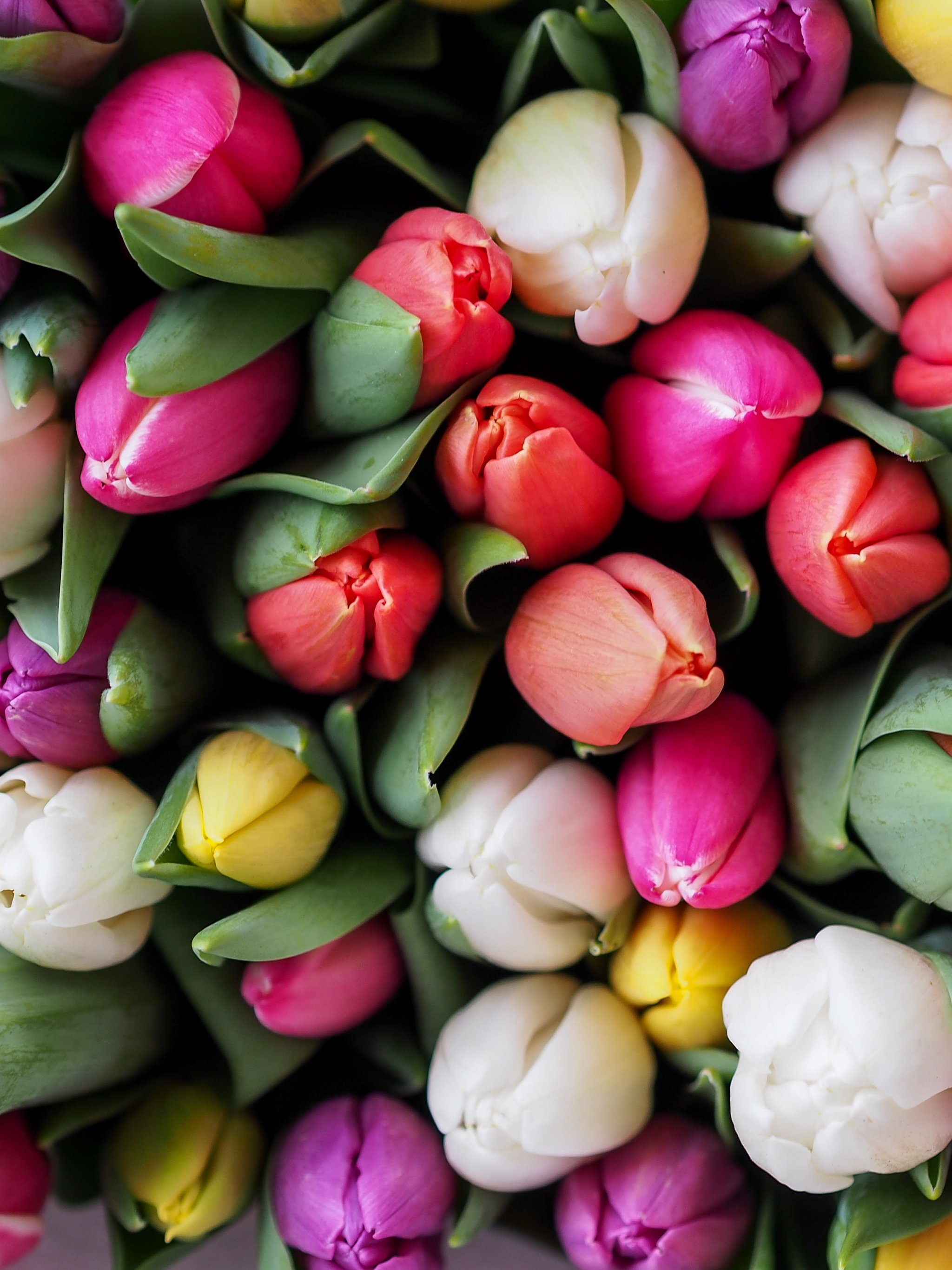 Tulips Bouquet Wallpaper , iPhone, Android \u0026 Desktop Backgrounds